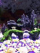 Accesorii Acvariu & Pește