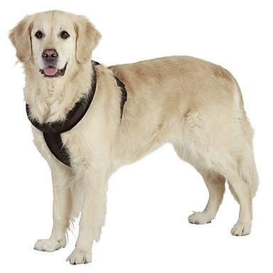 Hund Geschirre Reflektierend Tragbar Atmungsaktiv Sicherheit Einstellbar Solide Nylon Schwarz Rot Blau