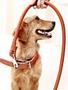 Собака Ошейники Поводки Регулируется / Выдвижной Безопасность Тренировки Однотонный