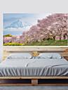 Adesivo Adesivi decorativi da parete - Adesivi 3D da parete Paesaggi Floreale / Botanical Riposizionabile Rimovibile