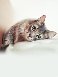 Cat Clothing & Accessories